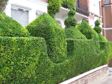 Gartenumrandung Pflanzen by 15 Ways To Trim A Hedge In Your Yard
