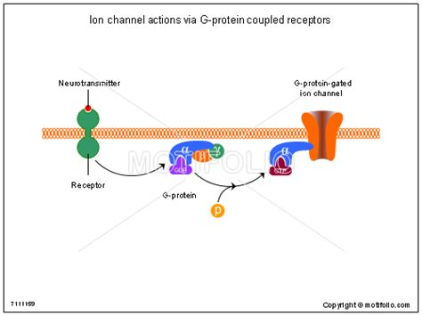 g protein diagram ion channel actions via g protein coupled receptors