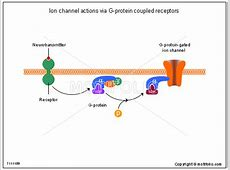 Ion channel actions via G-protein coupled receptors ... G Protein Coupled Receptors Diagram