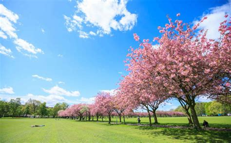 value 9 cherry tree park edinburgh top 10 things to see and do in edinburgh in winter places to see in your lifetime
