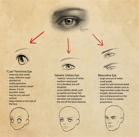 male vs female eyes eyes in manga feminine vs masculine by dragonreine on