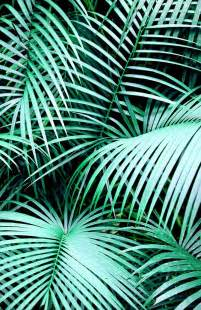 palm leaves google search video backgrounds pinterest to be models and posts