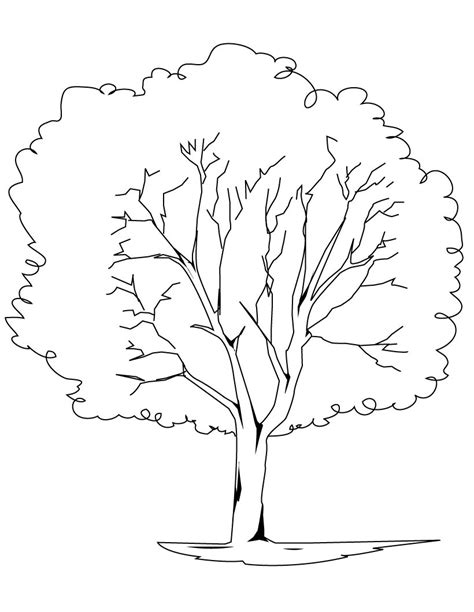 Free Complex Trees Coloring Pages Printable Tree Coloring Page