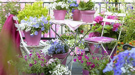 fiori per terrazzo al sole primavera decora 231 245 es para a esta 231 227 o westwing