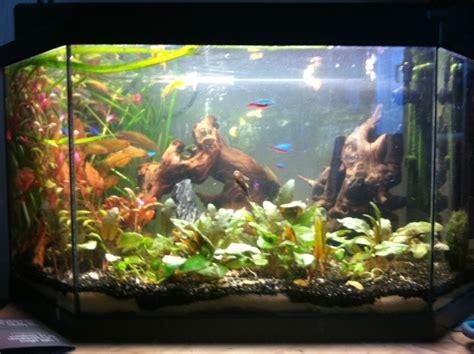aquarium aquarium d eau douce tropicale 50l page 2