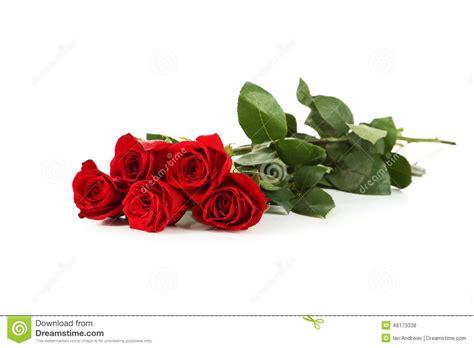imagenes de rosas rojas frescas cinco rosas rojas frescas en blanco stock photos 12 images