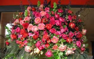 garden roses pictures information specs flowers gallery