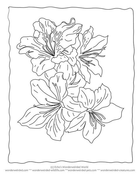 coloring pictures of realistic flowers realistic flower coloring home
