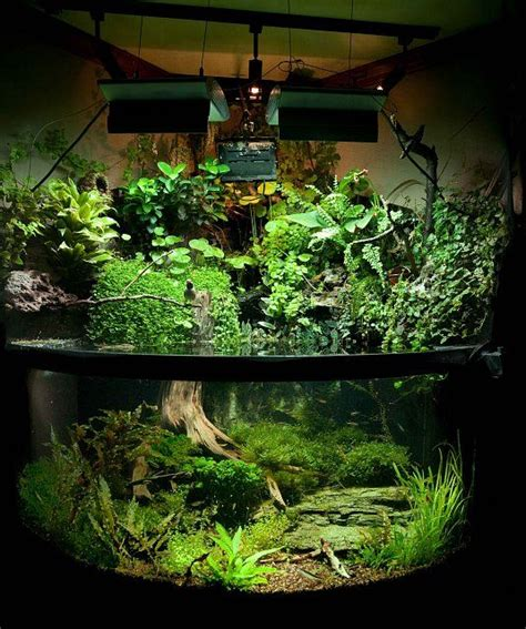 planted aquarium aquascaping emergent plants aquarium wow i would love to have this