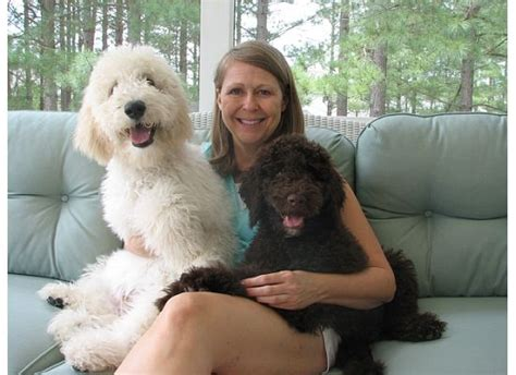 pookie doodle puppy goldendoodles are big lapdogs they cuddling and