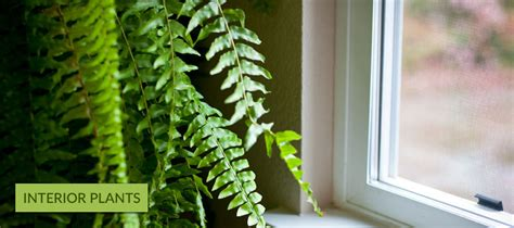 Interior Plantscapes Installation Maintenance And Management by Engledow Home Landscaping Services Indianapolis