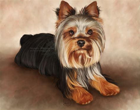 pocket yorkie pocket yorkie painting by bezumiye on deviantart