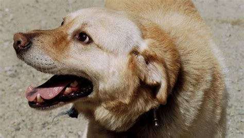 how to fearful dogs getting started fearful dogs