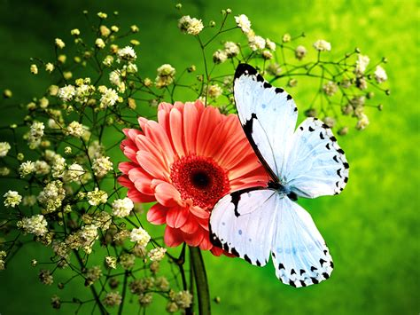 colors of nature hd butterfly wallpapers hd wallpapers