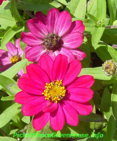 annual perennial flowers picket fence greenhouse gardens dianemummvideos