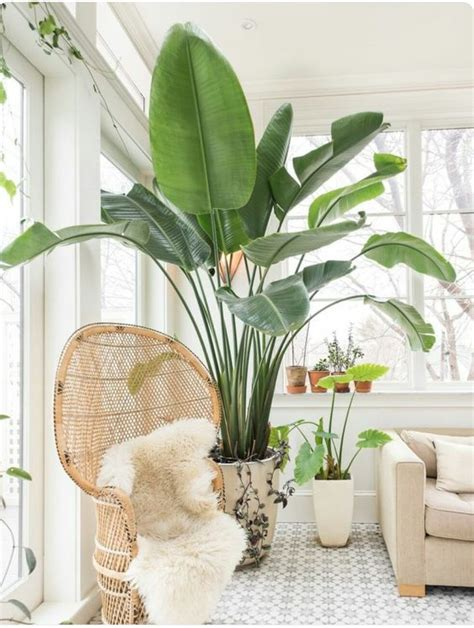 good inside plants dos and don ts of decorating with plants gathered styled