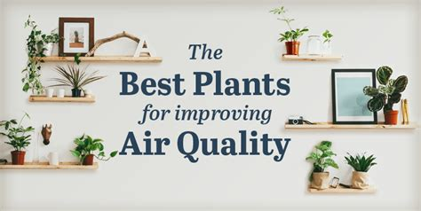 best plants for air quality the best plants for improving air quality infographic