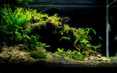 Aquascaping For Beginners by Plants For Lazy Beginners No Co2 Aquascaping World Forum