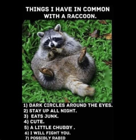 Racoon Meme - that moment you realize you re a raccoon memes