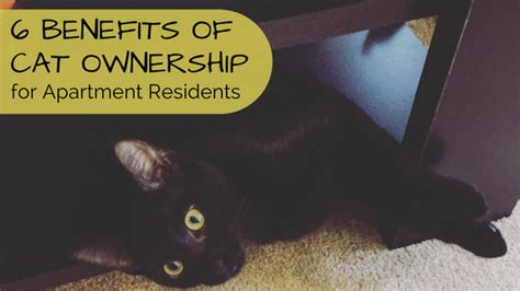 7 Benefits Of Owning A Pet by Hirschfeld Homes Hirschfeld Homes