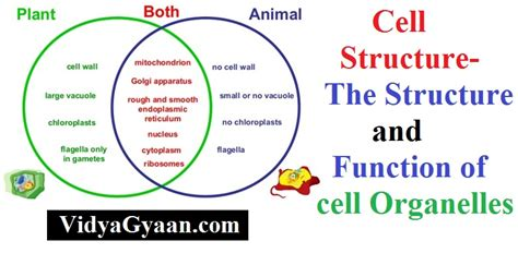 purpose and generic structure of biography cell structure the structure and function of cell