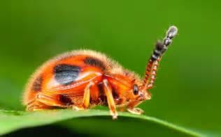Ninja masters weird looking spiders in world xinhua english news