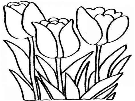 gambar bunga tulip cantik   dunia