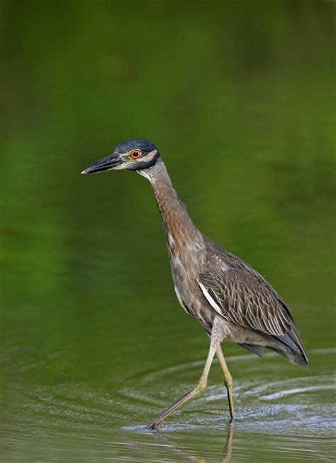 top 28 nocturnal birds florida new backyard bird