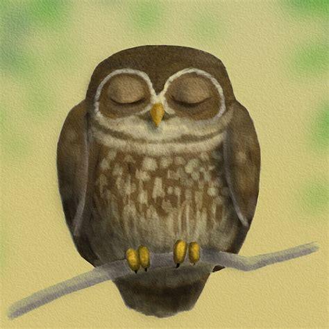 Sleepy Owl sleepy owl is sleepy by brian hunsel on deviantart