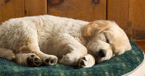 ll bean golden retrievers premium fleece top replacement bed cover bed covers free shipping at