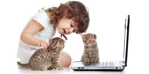 merawat kucing  pemula merdekacom