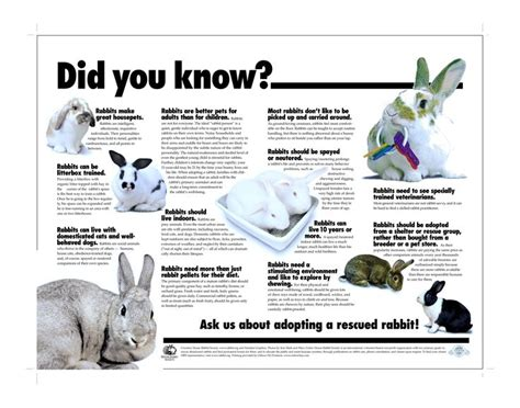 7 Facts On Bunny Rabbits by 49 Best Facts Info Images On Bunnies Pet