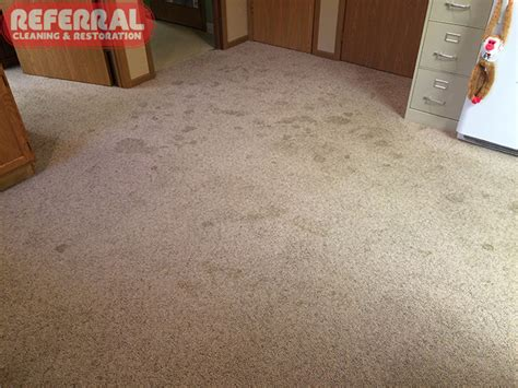 urine on carpet pet stain odor removal fort wayne in referral cleaning restoration