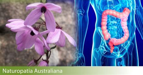 fiori australiani funzionano naturopatia australiana dr trabalza