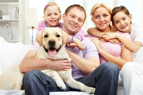 finance a puppy puppy financing san diego puppy