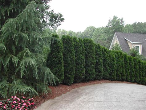 landscaping my nashville home possibilities