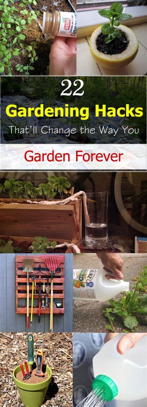 22 kitchen hacks that will change you forever how to 22 gardening hacks that ll change the way you garden