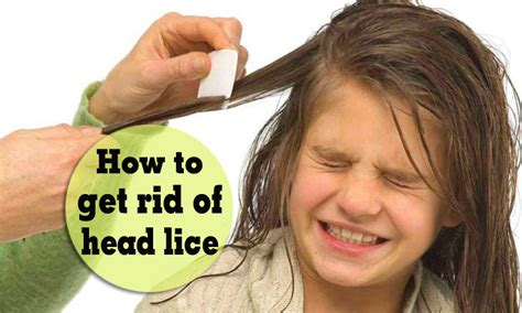 tips on how to get rid of lice eggs naturally