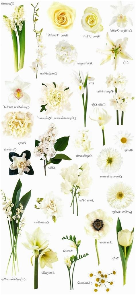 white names white flower names for weddings flowers