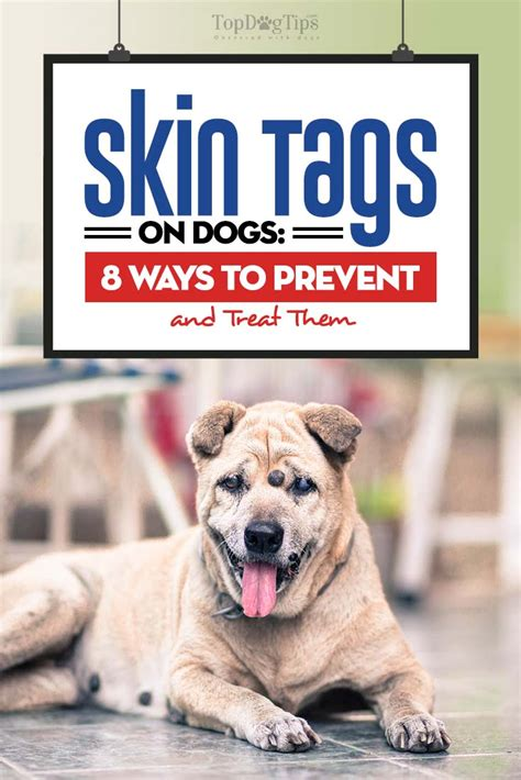 skin tags on dogs skin tags on dogs 8 ways to prevent and treat them