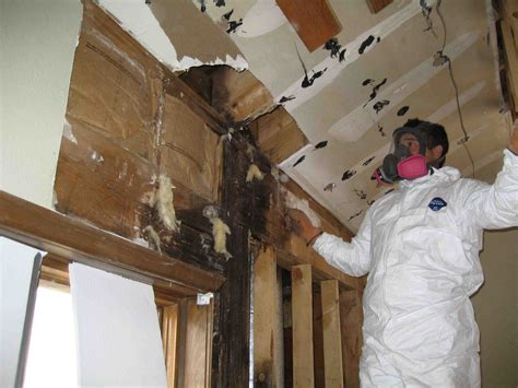 midwest basement tech steps to hiring the best mold