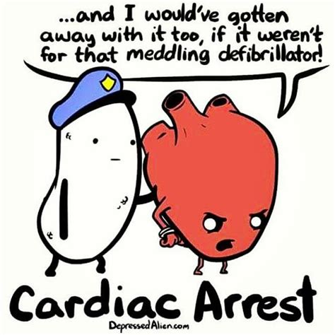 a cat and cardiac arrest the s forge mystery series volume 1 books 1000 ideas about jokes on jokes lol and