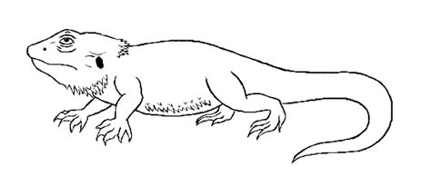 coloring page bearded dragon free bearded dragon coloring page picture samantha white