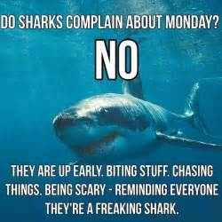 Olympic Bench Do Sharks Complain About Monday Crossfit Shoofly