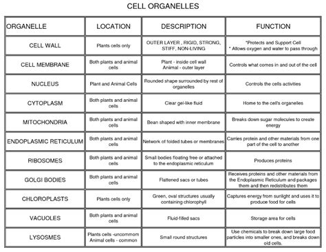 Cells And Their Organelles Worksheet Answers by 17 Best Images Of Cell Organelle Worksheet Pdf Cell