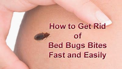 how to get rid of bed bug bites scars best 25 bed bugs ideas on pinterest bed bug spray bed