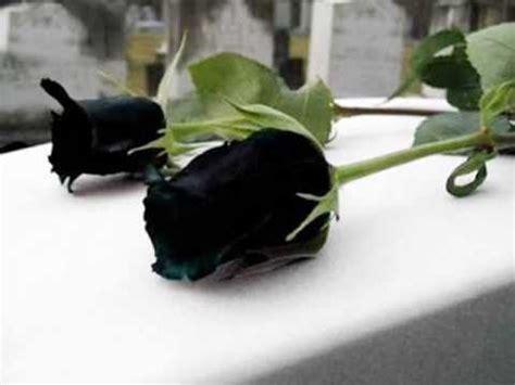 imagenes arañas negras mis flores negras de julio florez youtube