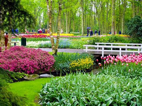 Dutch Country by The Most Colourful Day Trip From Amsterdam Keukenhof Gardens