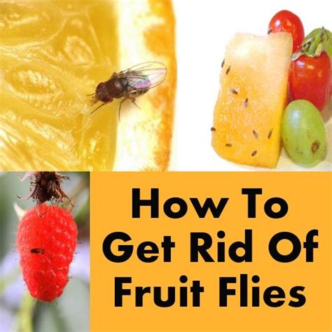 How To Get Rid Of Fruit Flies In The Kitchen by Pin By Jackie Lynch On Handy Tips
