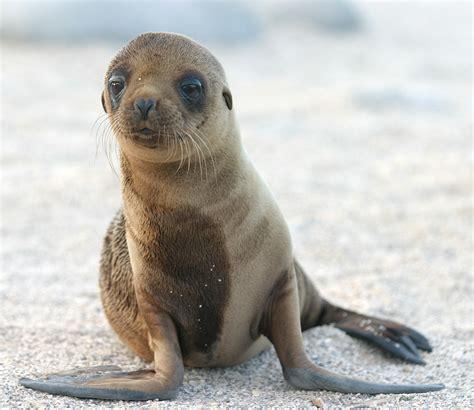 sea puppy bestand sea pup jpg